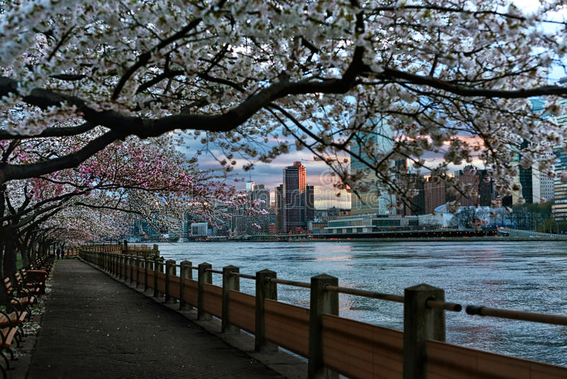 New York blossom stock photo