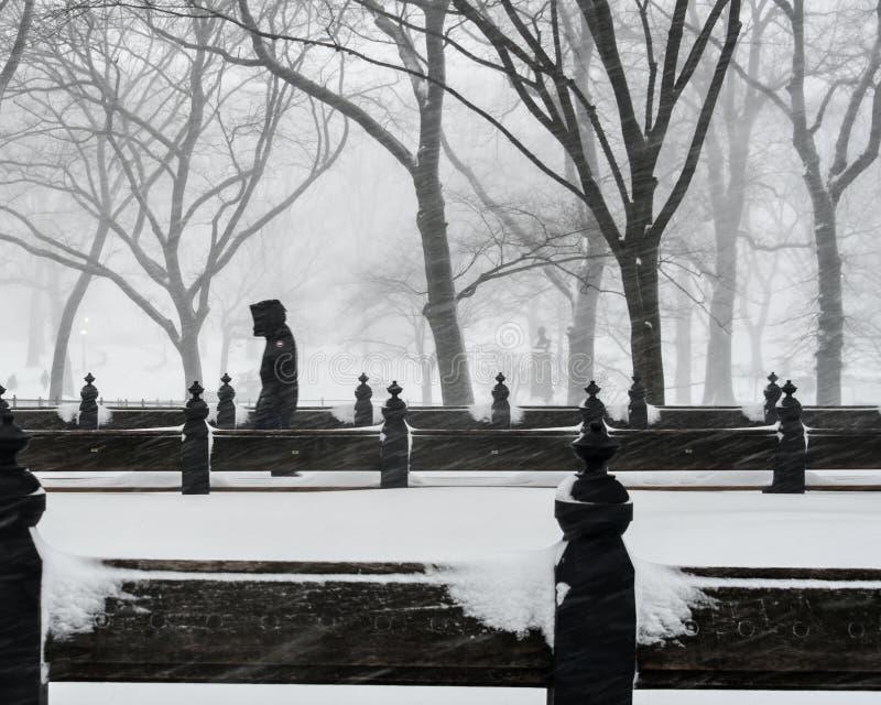 New York, 1/23/16: Central Park coperto in forte nevicata durante la tempesta Jonas di inverno fotografia stock libera da diritti