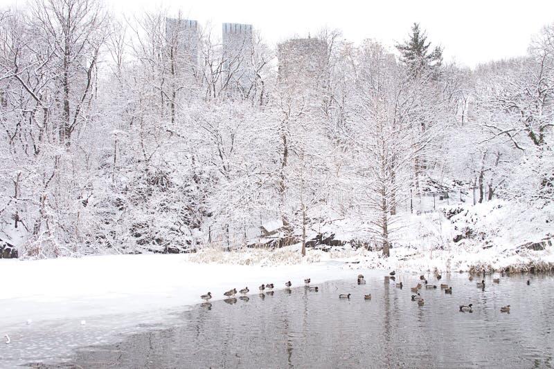 New York City Central Park i vinter arkivbild