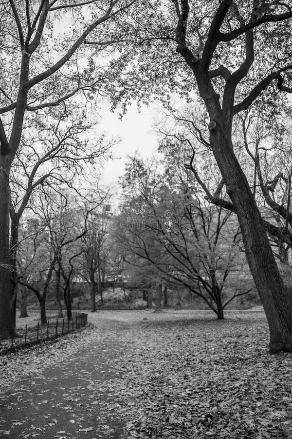 New York City - Central Park no autum - imagem preto e branco imagens de stock royalty free