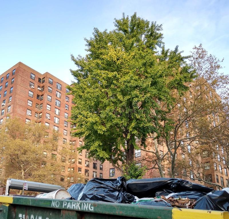 New York City Trees Near An Apartment Building And A Garbage Dumpster, Brooklyn, NY, USA. Trees in the Clinton Hill neighborhood of Brooklyn. Trash is piled in royalty free stock photography