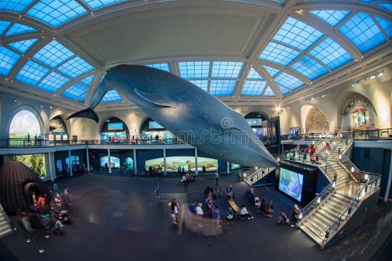 NEW YORK, EUA - 21 de abril de 2017 - turista e crianças que visitam o museu da história natural foto de stock royalty free