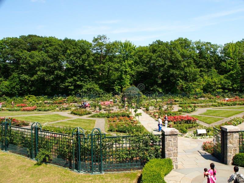 New York - Förenta staterna, Peggy Rockefeller Rose Garden på den New York botaniska trädgården i Bronx i New York City arkivfoto