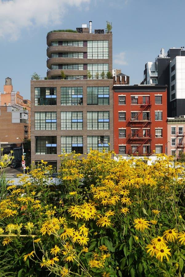New York: Fiori urbani di giallo del parco di Highline fotografie stock libere da diritti