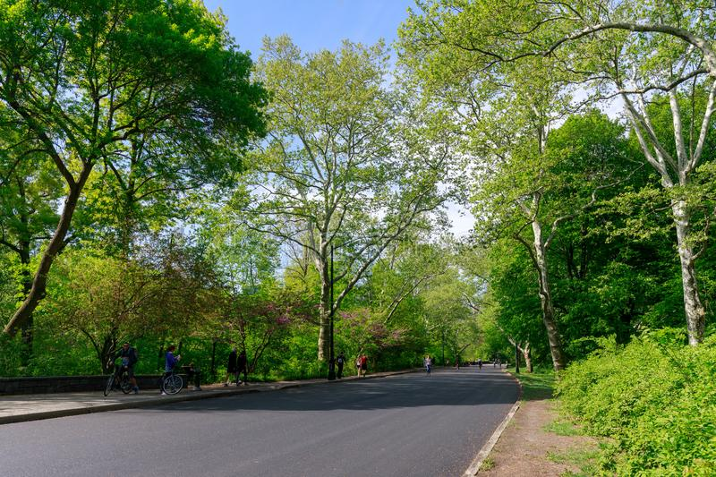 View of Central Park in New York City in spring stock photos