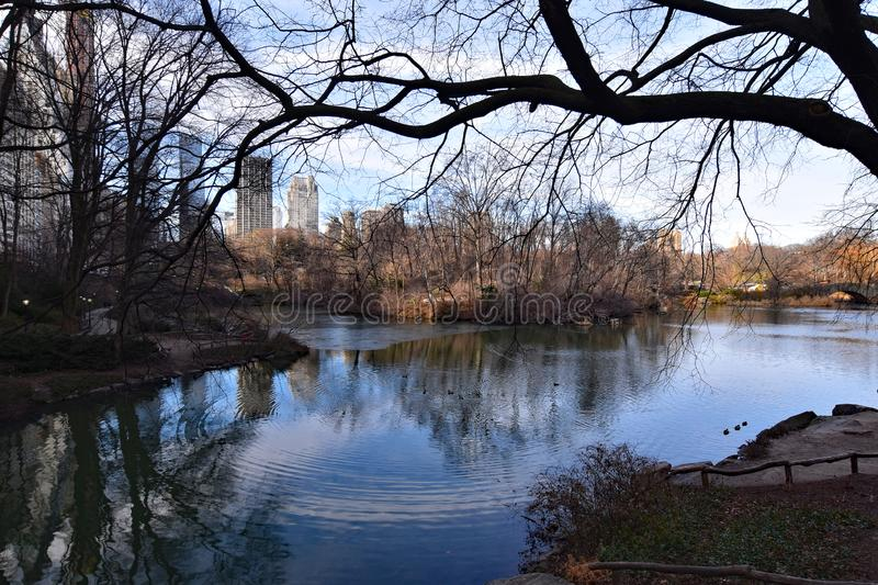 New York USA Central park in winter, lake with ducks. High rise buildings in background royalty free stock image