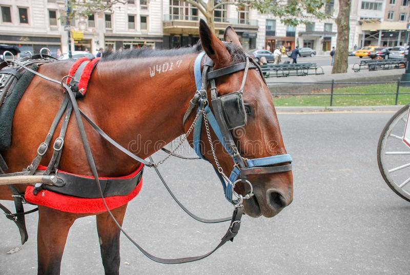 Brown horse carriage waiting for tourists at Central Park in NYC stock photos