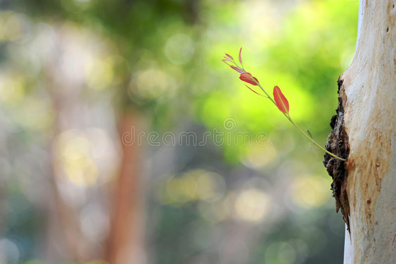 New young leaf on nature stock photography