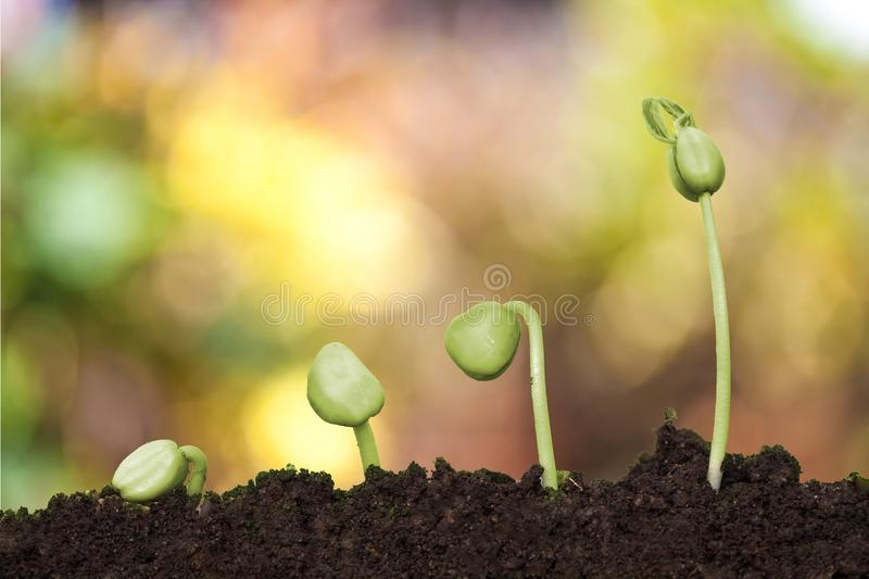New Young plant growing in the creamy light royalty free stock photography