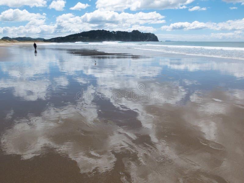 New Zealand beach royalty free stock photography