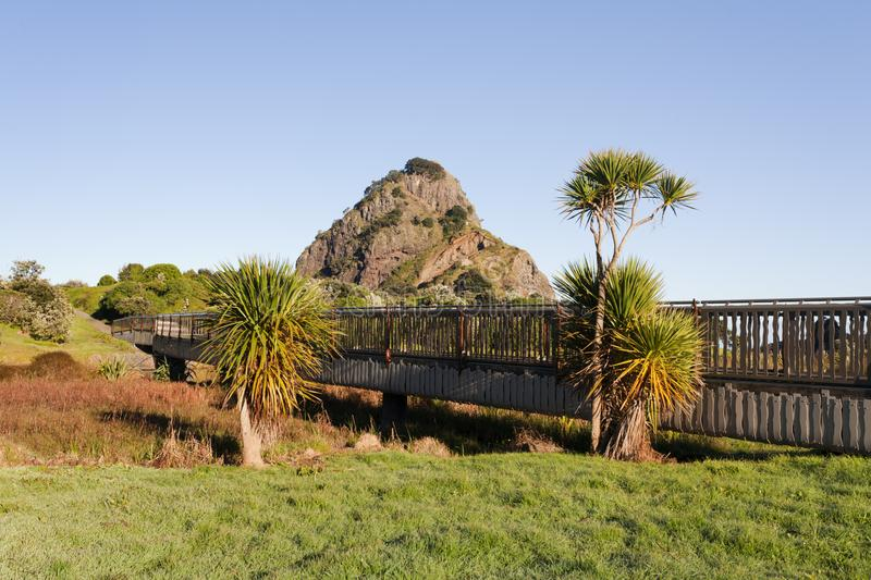 New Zealand Cabbage Trees at Piha, Auckland. Cabbage trees cordyline australis at Piha, Auckland, New Zealand, with Lion Rock in the background royalty free stock image