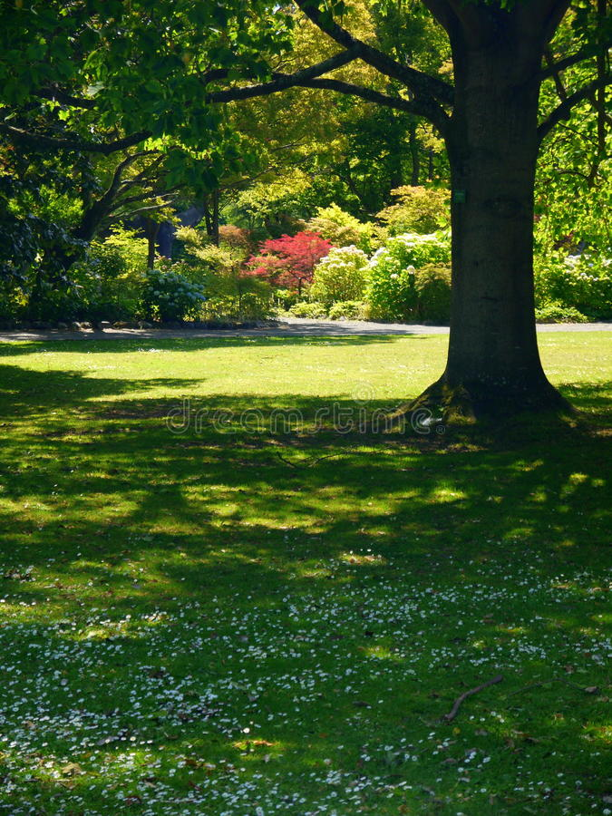 New Zealand: Christchurch botanic gardens trees and shrubs stock photography