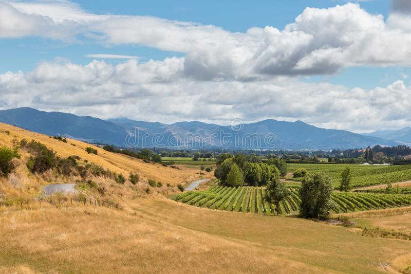 New Zealand countryside with vineyards and grassy hills stock image
