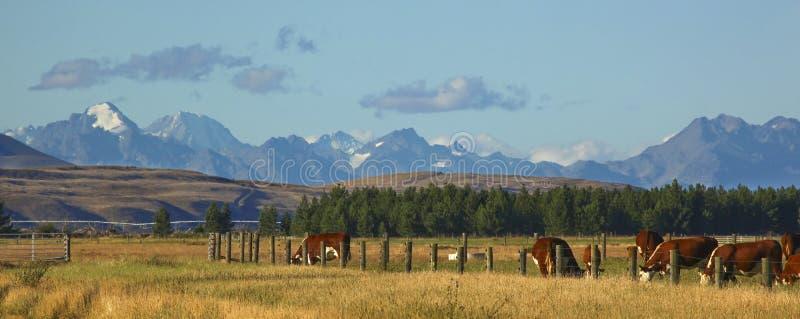 New Zealand Farm Landscape stock photos