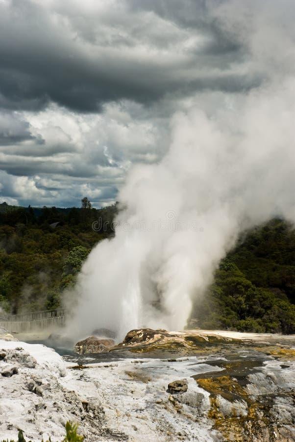New Zealand Geyser royaltyfri foto