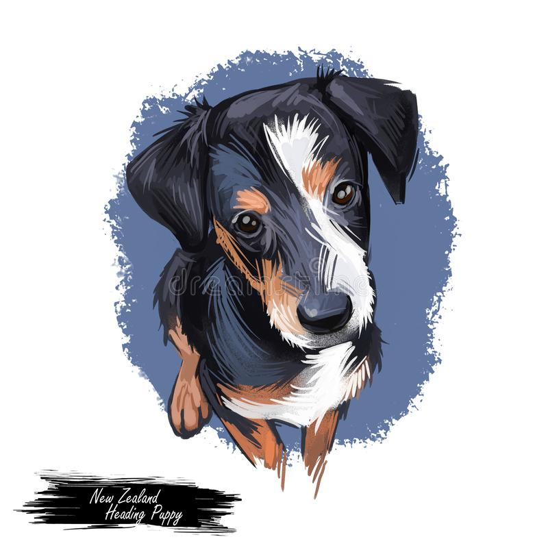Free New Zealand Heading Puppy, Purebred  Domesticated Animal Digital Art Stock Image - 159816441