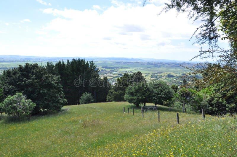 New Zealand hilside royalty free stock image