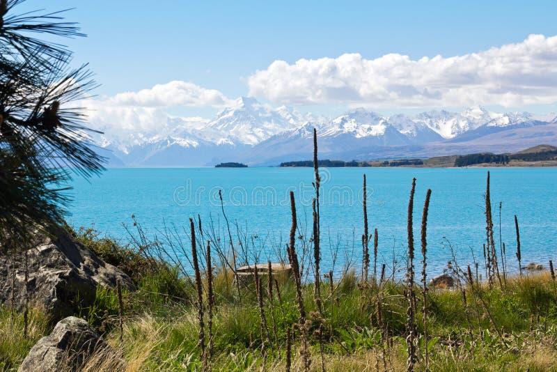 New zealand, lake pukaki stock image