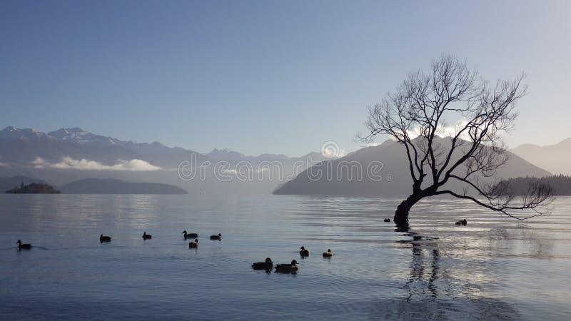 Wanaka Lake stock photos