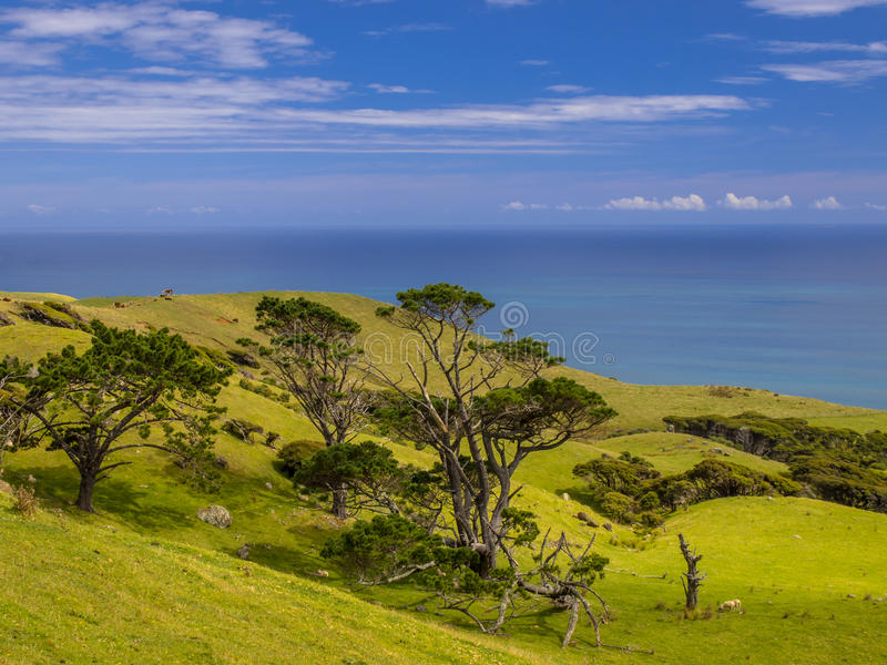 New Zealand landscape green hills with sea. Ocean view over green hills with trees near Raglan, New Zealand stock photos