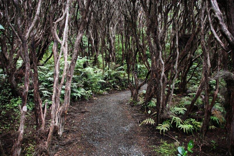 Download New Zealand native bush stock photo. Image of endemic - 17265196