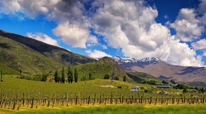 New Zealand, panorama of wineyards Gibbston, Otago. New Zealand, View of Alpine mountains and wineyards Gibbston, Otago, south island royalty free stock image