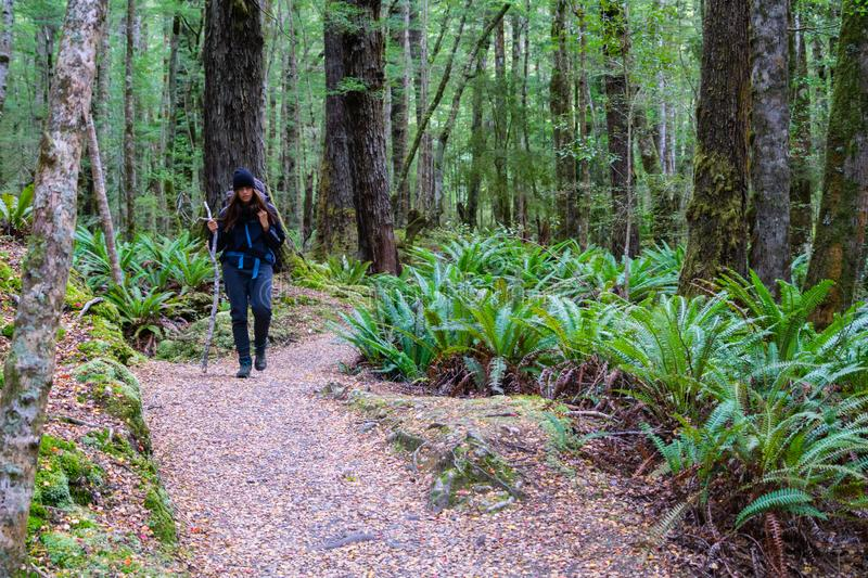 In New Zealand rain forest royalty free stock image