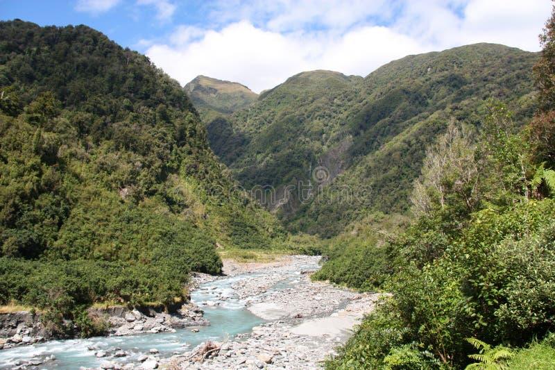 New Zealand rainforest royalty free stock photography