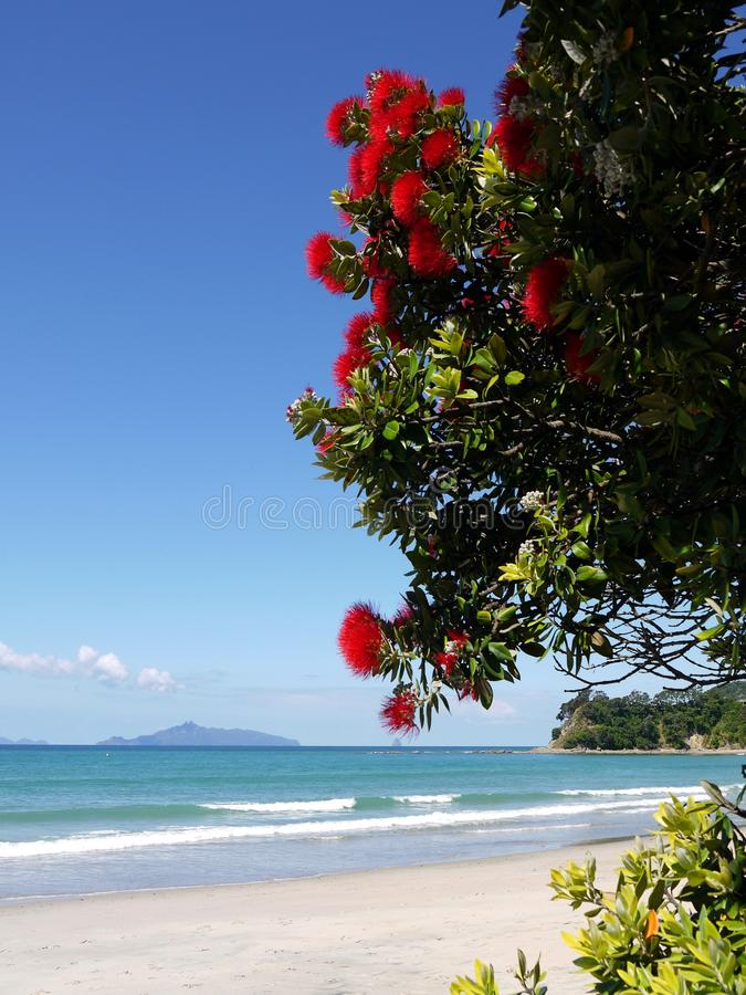 Free New Zealand: Red Flowering Tree At Beach Royalty Free Stock Photos - 22607318