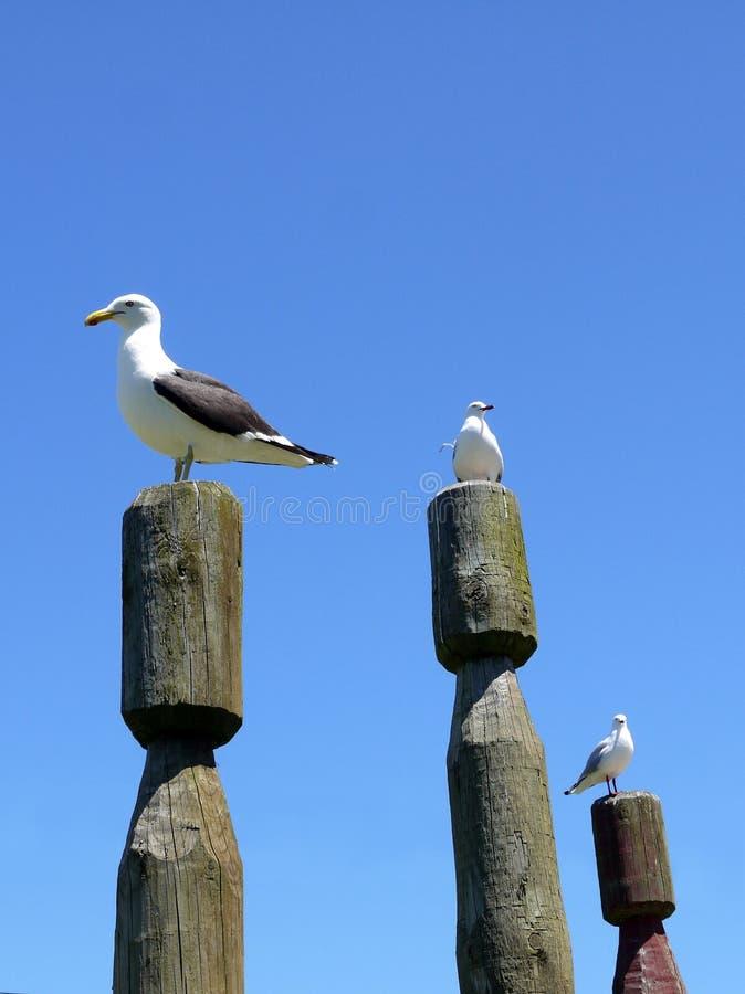 New Zealand: Sea Birds On Maori Pou Sculptures Stock Images