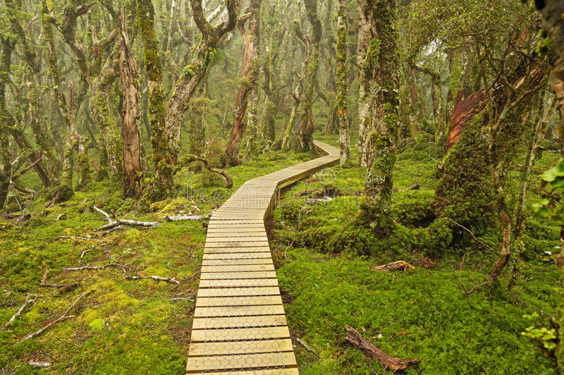 New Zealand South Island Trail stock photography