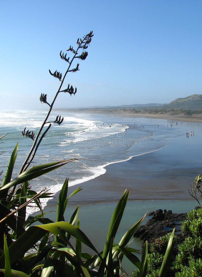 New Zealand surfing beach with flax foreground.