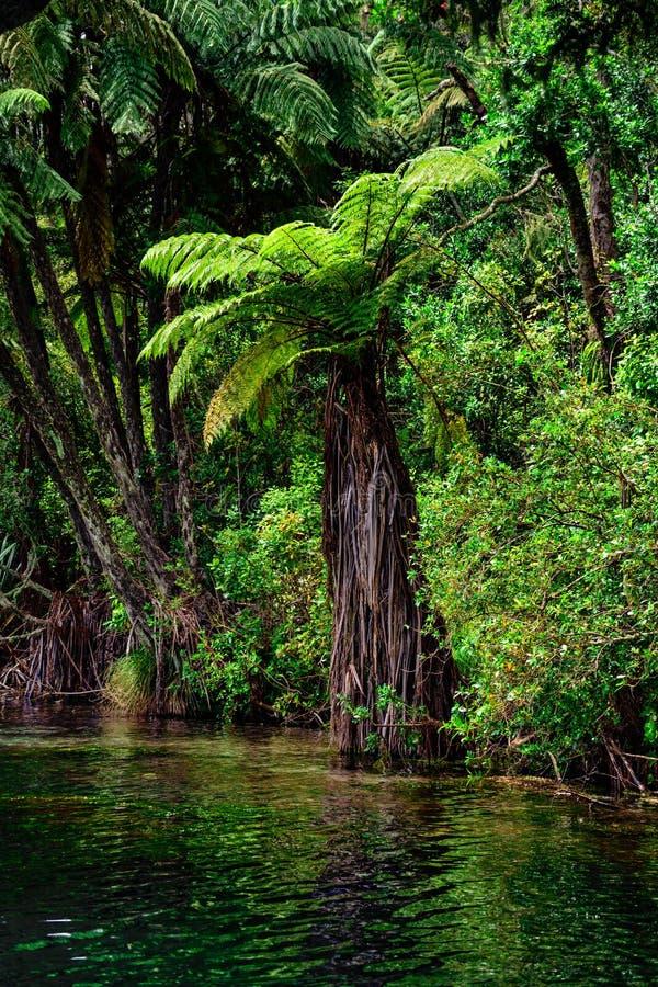 Free New Zealand Tree Fern Stock Images - 167592534
