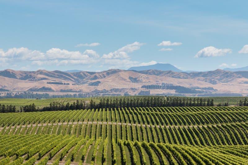 New Zealand vineyards across rolling hills royalty free stock image
