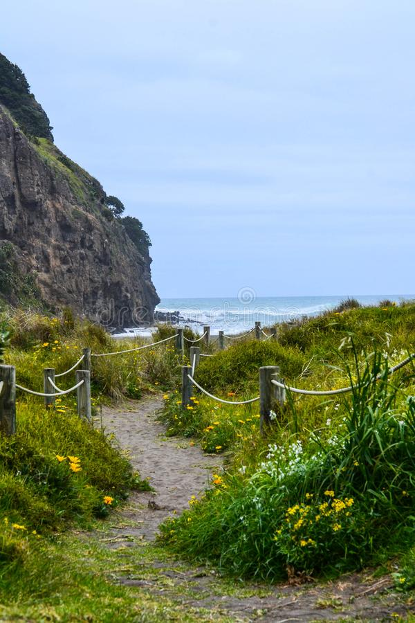 Piha Beach with Lion Rock, New Zealand. New Zeland iconic, famous beaches concept. Panoramic scenic landscape view of surfers popular Piha Beach and Lion Rock in stock images