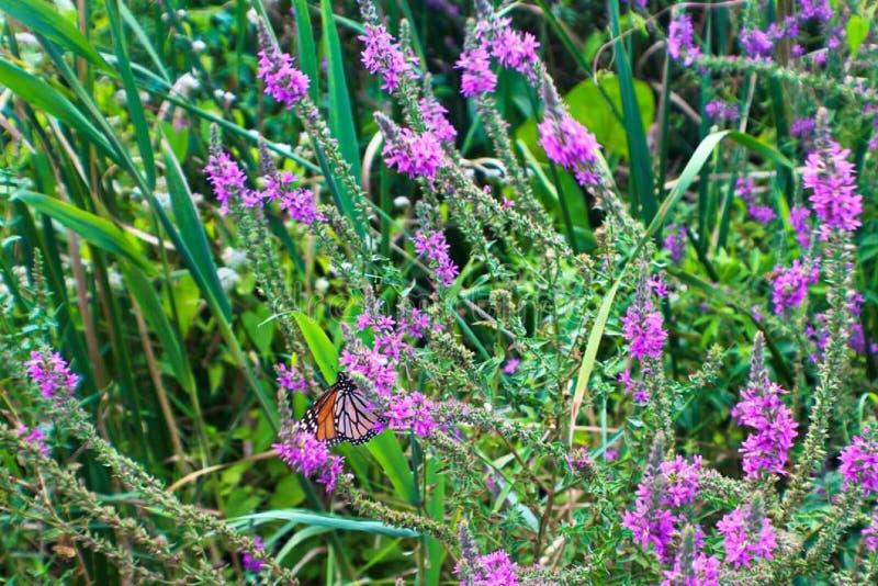 Newark Reservoir Delaware Butterfly Flowers stock photos