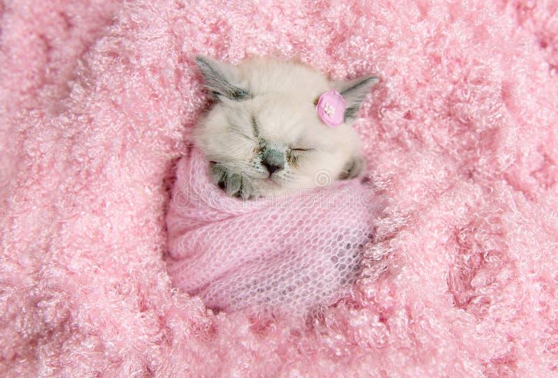 Newborn великобританский котенок спит на розовом мехе стоковые изображения