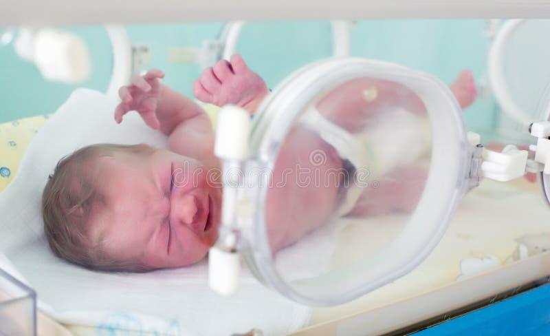 Newborn в инкубаторе стоковая фотография