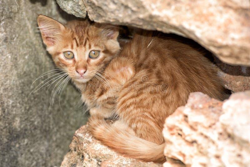 Newborn кот младенца пока прячущ стоковые изображения rf