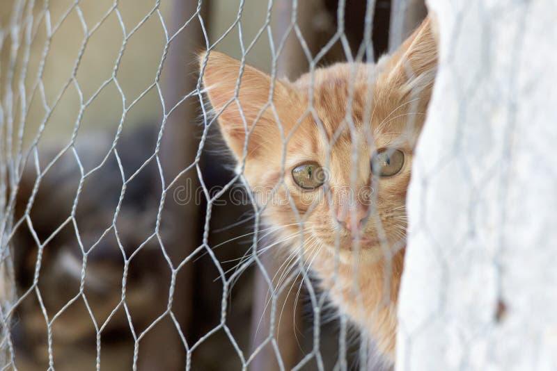 Newborn кот младенца пока прячущ стоковые изображения