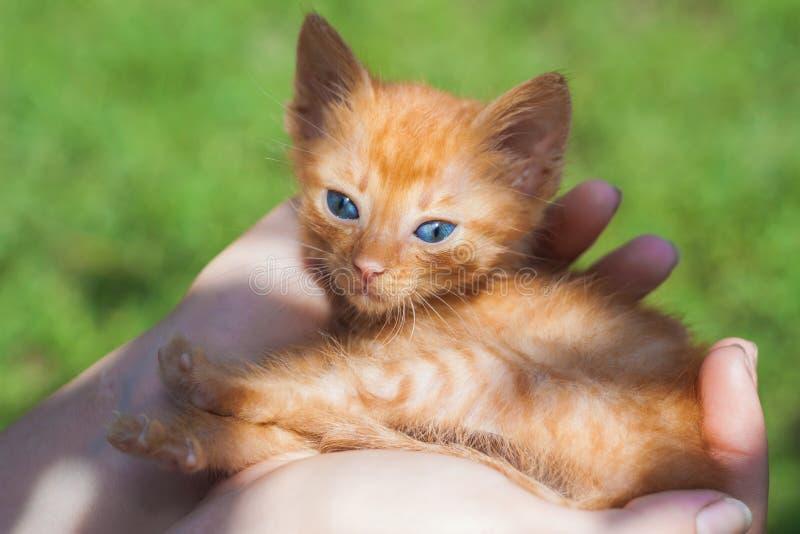 Newborn красный котенок в руках нося в солнечном свете стоковое изображение