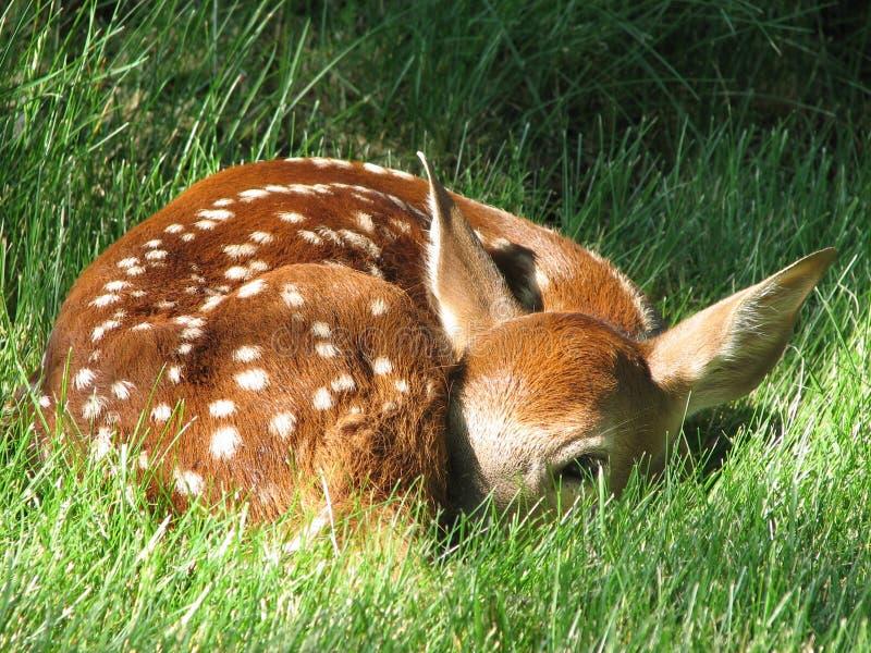 newborn стоковые фотографии rf