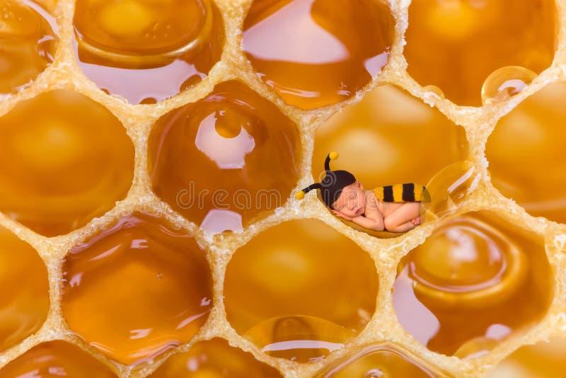 Newborn baby bee in honeycomb stock photos