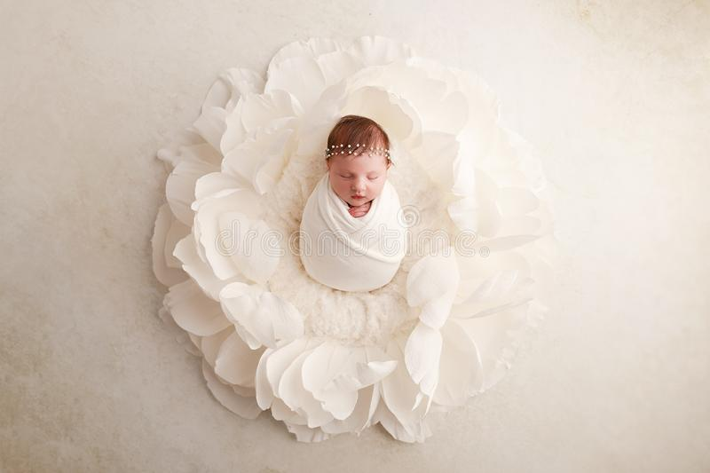 Newborn baby girl - 12 days old. Newborn baby girl, 12 days old, posed in giant white flower, studio session royalty free stock photo