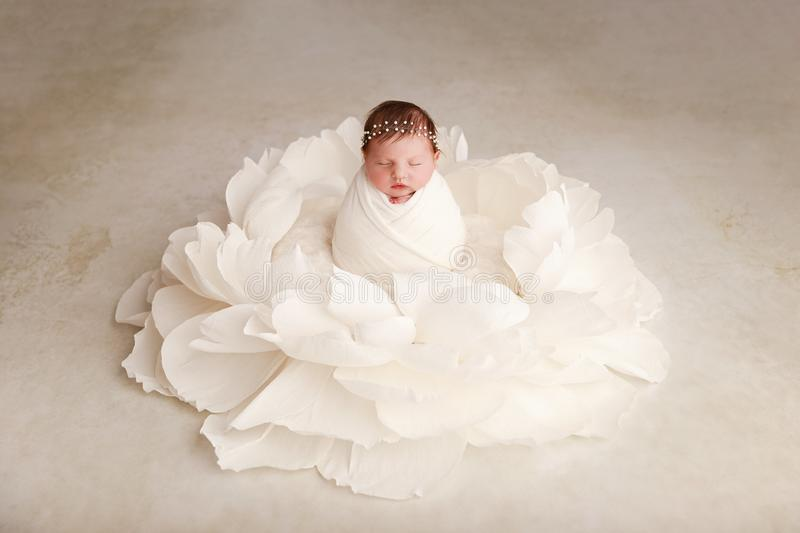 Newborn baby girl - 12 days old. Newborn baby girl, 12 days old, posed in giant white flower, studio session royalty free stock photos