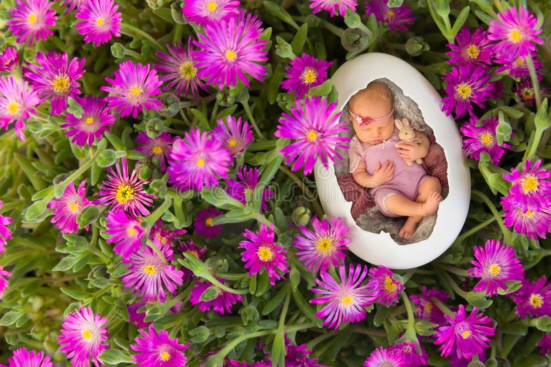 Newborn baby in pink iceplant. Newborn baby sleeping in an egg in pink iceplant stock photo