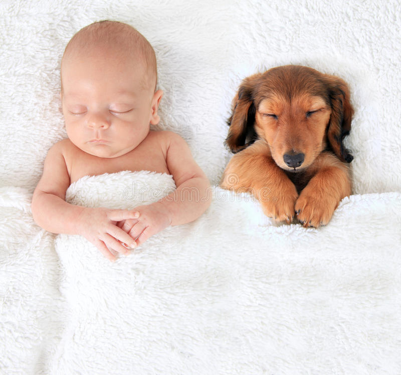 Newborn baby and puppy royalty free stock photos