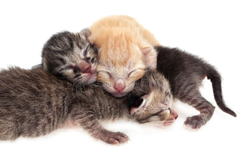Newborn cats. New born baby cats on white background royalty free stock images
