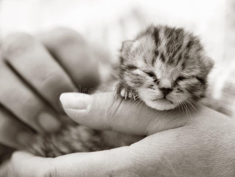 Newborn kitten being held royalty free stock images