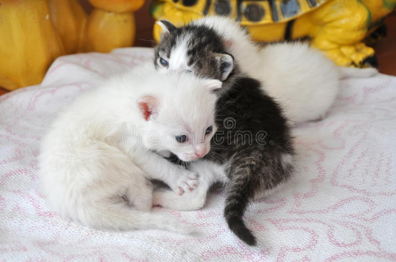 Newborn kittens stock images